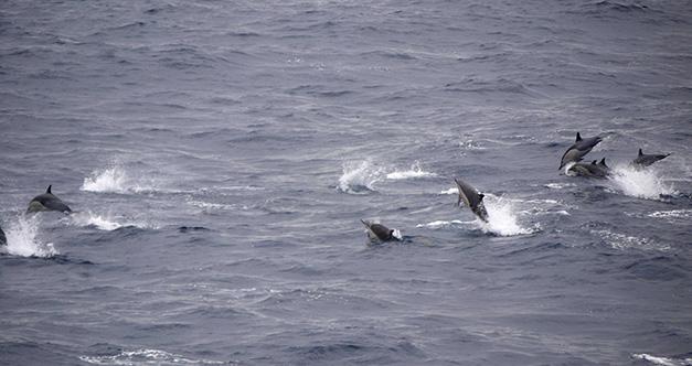 Internationale Frachtschiffreisen Pfeiffer - Von Seegang und Landgang - Delphine