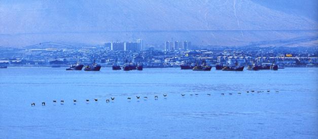 Internationale Frachtschiffreisen Pfeiffer - Von Seegang und Landgang - Pelikane